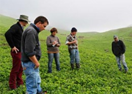 NEW SUB CLOVER VARIETIES IMPRESS