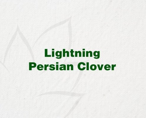 Lightning-Persian-Clover