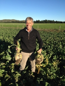 Ken Townley of Luisetti Seeds struggles to lift swedes grown by Jonathan Austin, Aroha Downs, Oxford