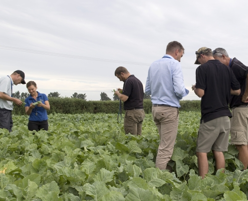 Leading Australian IPM specialists, Paul Horne and Angelica Cameron, share their knowledge with Luisetti Seeds agronomists at the FMC NZ IPM field day in Leeston.