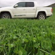 A sub clover dominant pasture, North Otago. A ute with Luisetti branding is parked in the background.