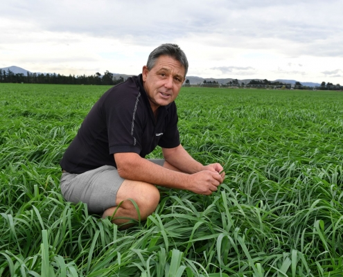 Agronomist Jack Harnett with Intimidator Oats. A valuable catch-crop, Intimidator Oats have the ability to regrow after grassing, are frost tolerant and have higher protein levels than many other cereal.