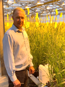 Vincent Luisetti with potential new cereal cultivars in the Sejet green house. (2nd Stage of the double haploid breeding process)