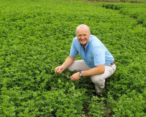 Professor Derrick Moot crouches in a field of legumes, inspecting them.
