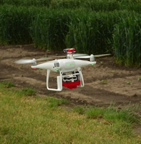 The Crop Drone in action assessing plots of Viceroy containing the resistance gene Bdv2 alongside standard Viceroy plots