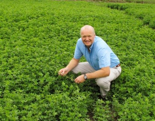 Legumes the answer to methane reduction