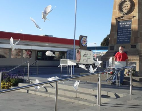Tony Hyde's White Pigeons Prove Popular at Special Events